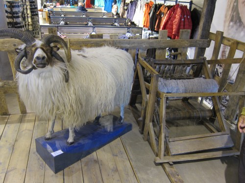 lopi sheep and yarn at Geyser store